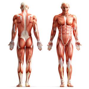 Styrketræning af hele kroppen
